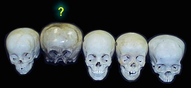 Comparing Skulls