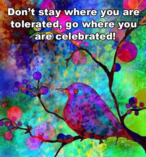 Don't stay where you are tolerated, go where you are celebrated.