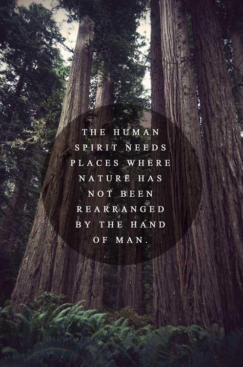The Human Spirit Needs Places Where Nature Has Not Been Rearranged By Human Hands