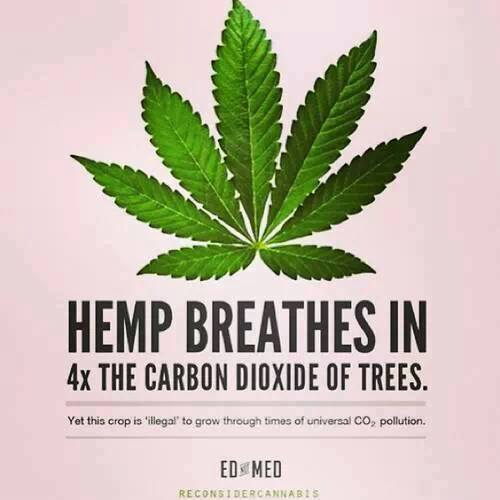 Hemp Breathes in 4x the carbon dioxide of trees