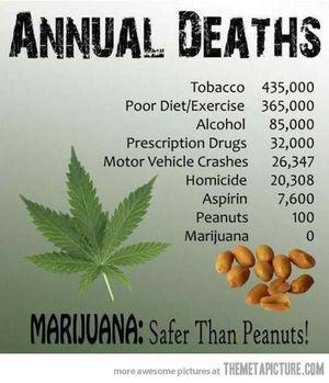 Marijuana Annual Deaths Zero - Safer Than Peanuts