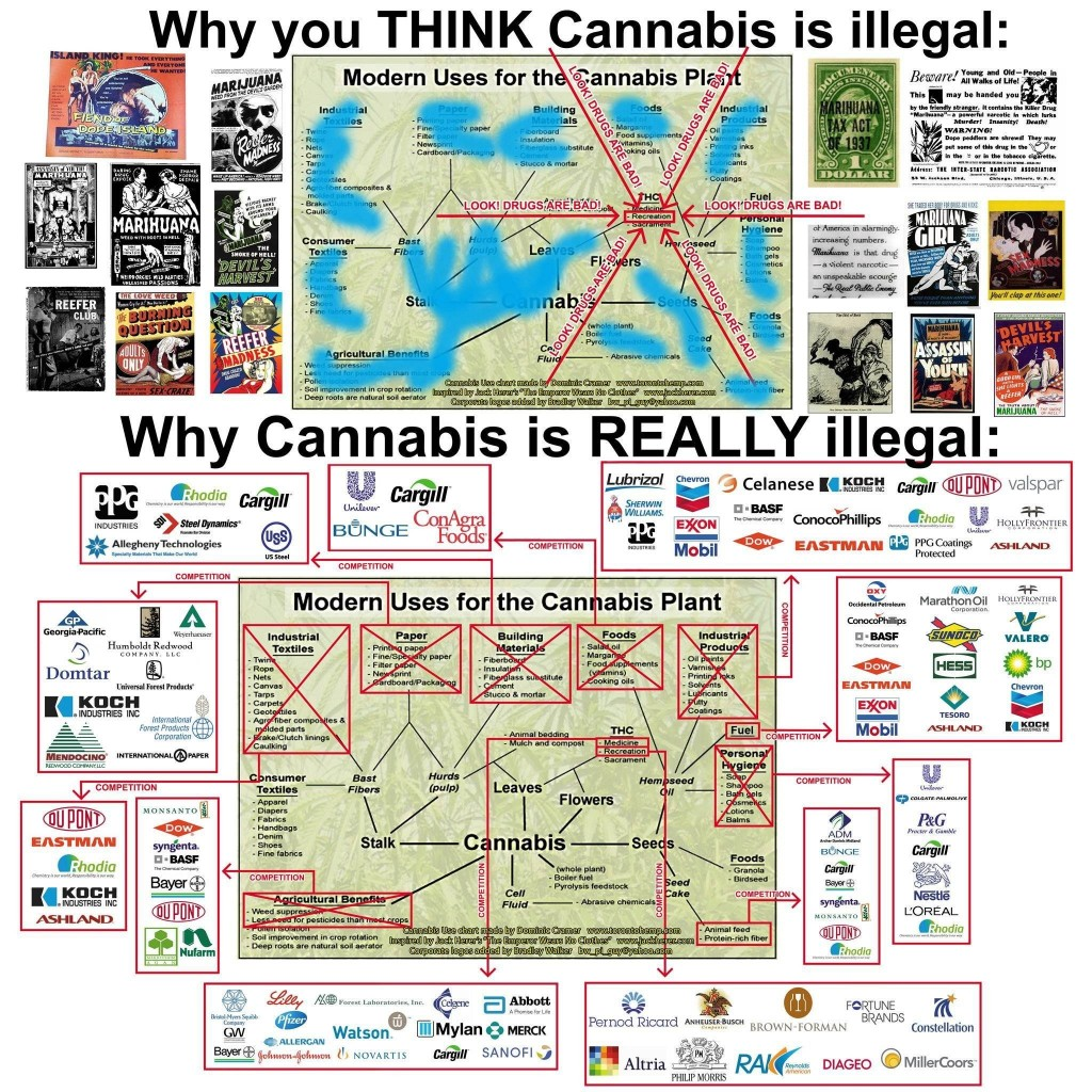Why You Think Cannabis Is Illegal - Why Cannabis Is Really Illegal